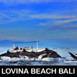 dolphin-tour-bali