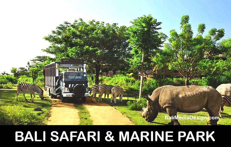 bali safari-professional bali tour driver-private transport service-transportation service- bali day tours, bali day tour package