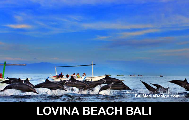 dolphin-tour-bali- professional bali tour driver-private transport service-transportation service- bali day tours, bali day tour package